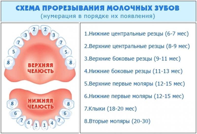 Схема прорезывания зубов у детей по возрасту 228